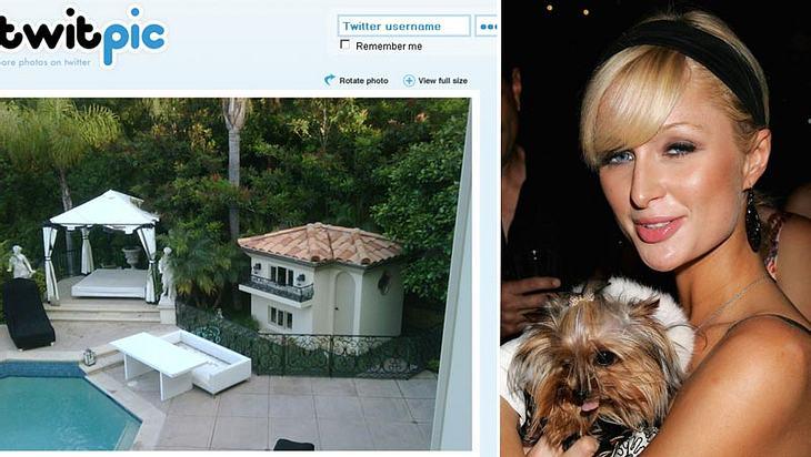 Der Foto-Beweis: Paris Hilton verwöhnt ihre Hunde nach Strich und Faden