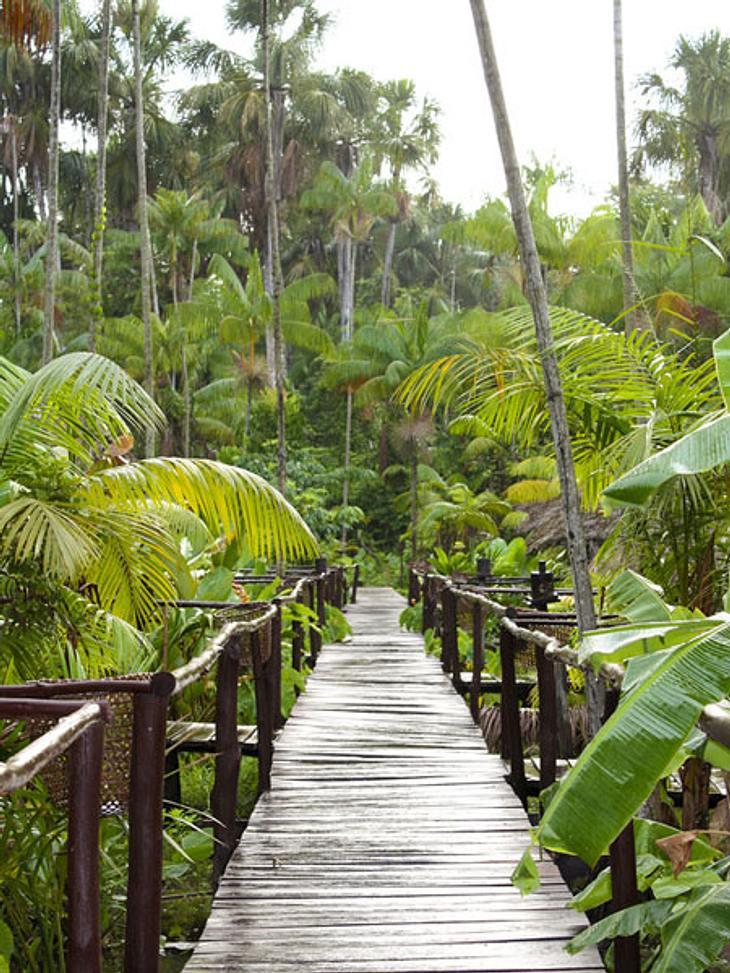 Dschungelcamp-Fakten: witzig und wissenswert!Fußmärsche: Wenn sich die Kandidaten auf den Weg zu einer der Ekel-Prüfungen machen, müssen sie sich zum Match-Bereich gut 750 Meter durch den Dschungel schlagen. Das Baumhaus ist rund 100 Meter