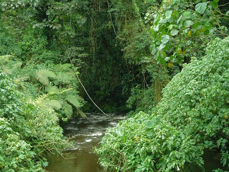 Dschungelcamp-Fakten: witzig und wissenswert!Freibad-Feeling: Der Mini-Wasserfall wurde künstlich angelegt. Das Wasser darin, sowie das Wasser der Dschungel-Dusche, wird leicht gechlort.
