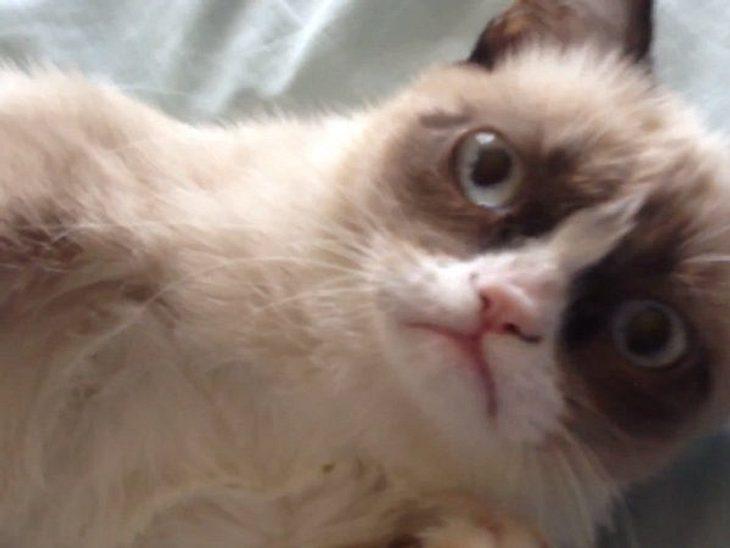 Läuft bei ihr! Grumpy Cat machte in zwei Jahren fast 100 Millionen Dollar
