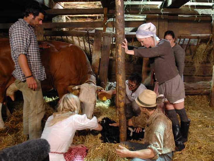 """""""Die Alm - Promischweiß und Edelweiß"""": Die HighlightsDie Kuh """"Nelke"""" hat endlich ihr Kalb bekommen! Die Hälfte der Almbewohner war da und hat bei der Geburt geholfen.,Zum Voting: Wer soll """"Die Alm"""" gewinnen? Hi"""