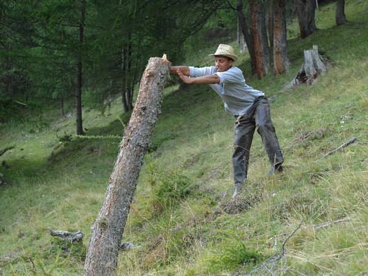 """""""Die Alm - Promischweiß und Edelweiß"""": Die HighlightsDer Checker versucht, einen Baumstamm den Abhang runter, näher an die Hütte zu schubsen."""
