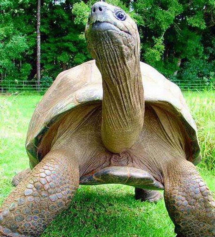 Älteste Schildkröte der Welt als schwul geoutet