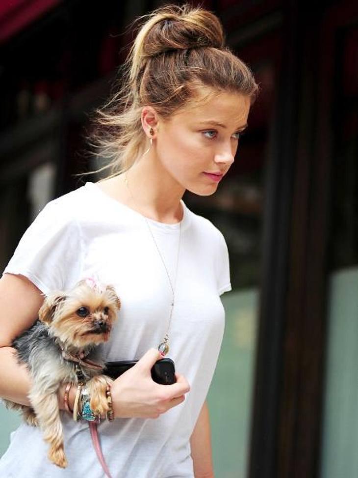 V.I.Pets: Die Stars lieben ihre HundeSicher ist sicher: Hunde-Mama Amber Heard (26) trägt Hündchen Pistol vorsichtshalber auf dem Arm. Für so einen winzigen Yorkie ist es unten auf der Straße ja auch ganz schön gefährlich...
