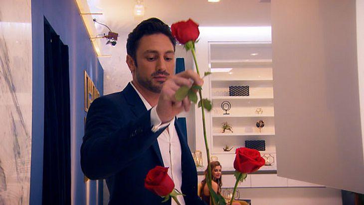 Wer wird die letzte Rose von Daniel Völz erhalten?