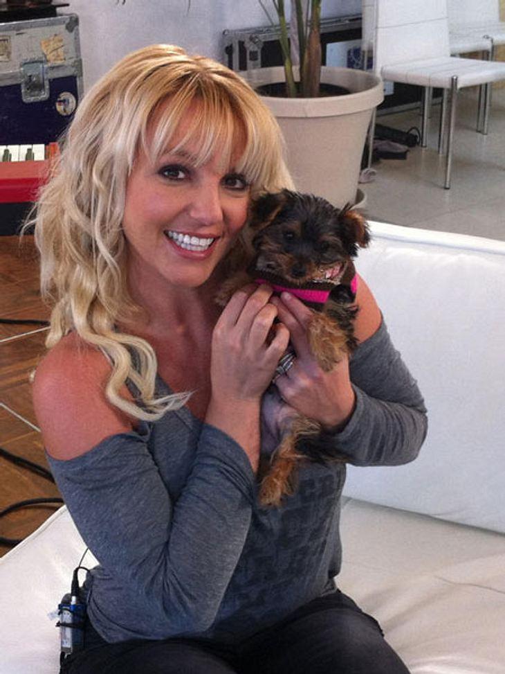 Britney Spears hat einen neuen Hund