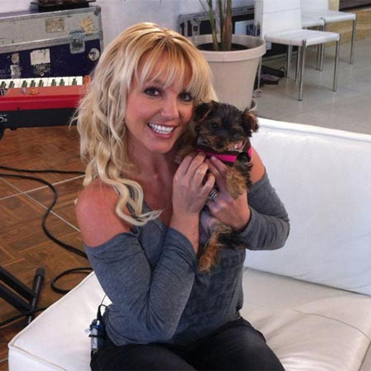 Britney Spears mit Hündin Hannah