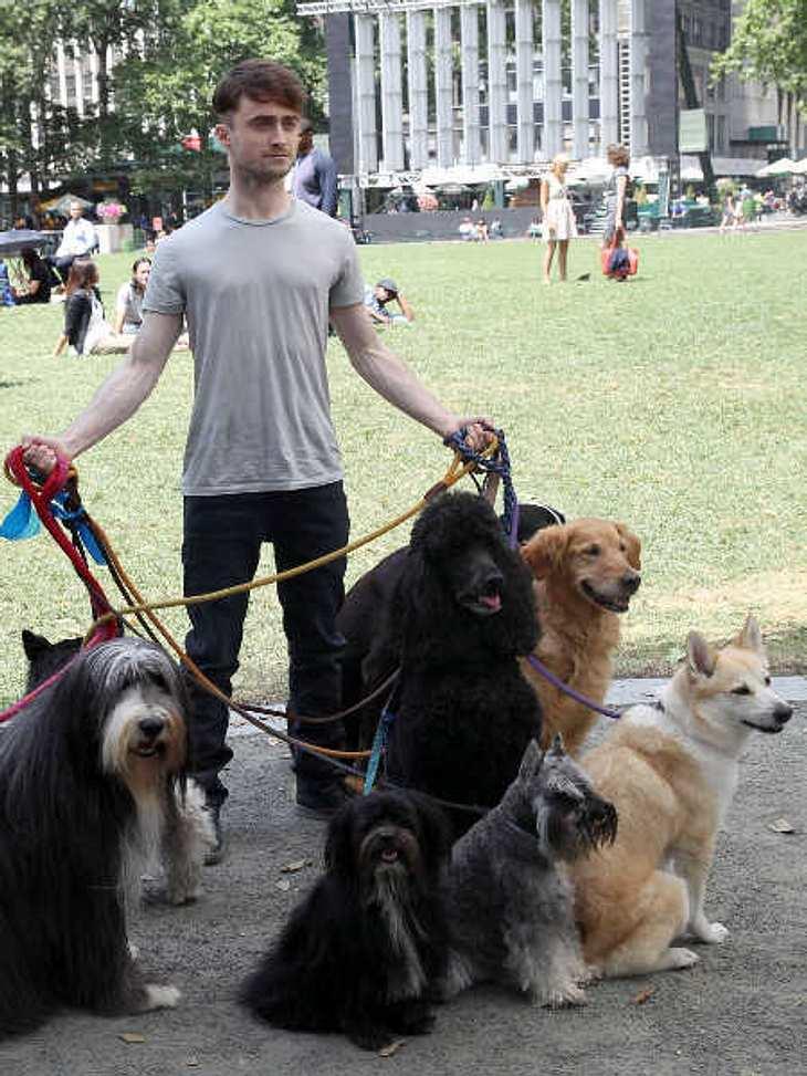 Daniel Radcliffe: Harry Potter als Hundesitter!