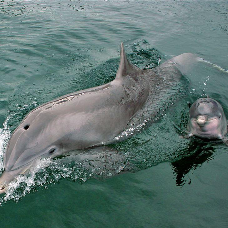 Duisburg: Delfin-Baby nach nur einer Woche gestorben