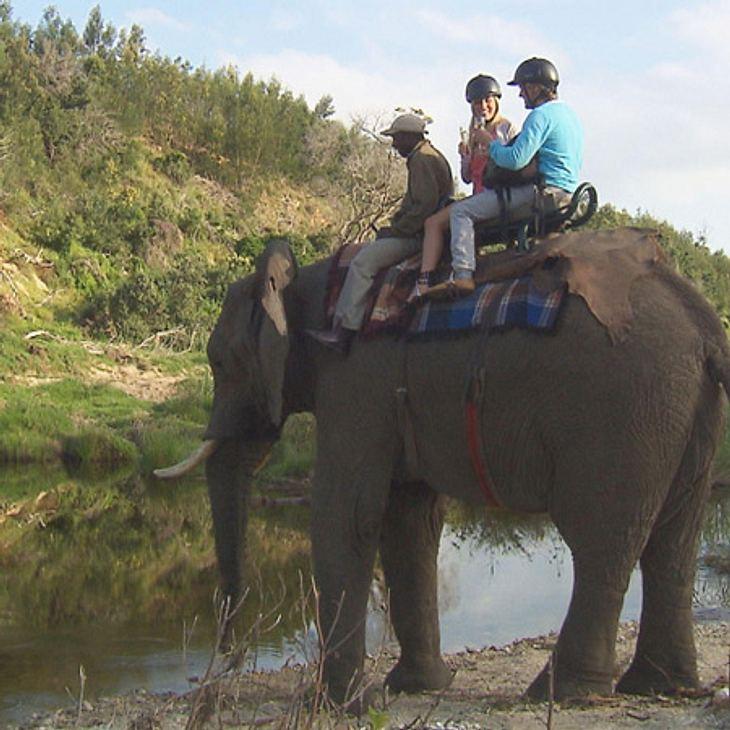 """Der Bachelor 2012: Die neusten Bilder,Buckelpiste! Dicht aneinander auf dem Elefanten sind Berührungen unvermeidbar. Der Bachelor Paul rechtfertig die Nähe: """"Es wackelt ganz extem. Und da muss man sich festhalten. Sissi hat einen Griff"""