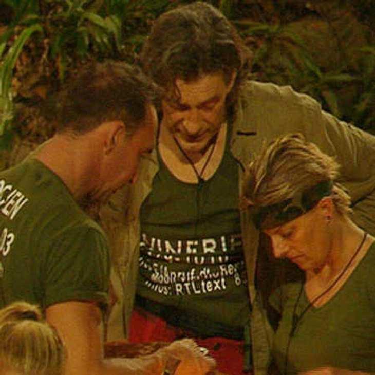 Jochen, Winfried und Tanja müssen nicht zur Dschungelprüfung
