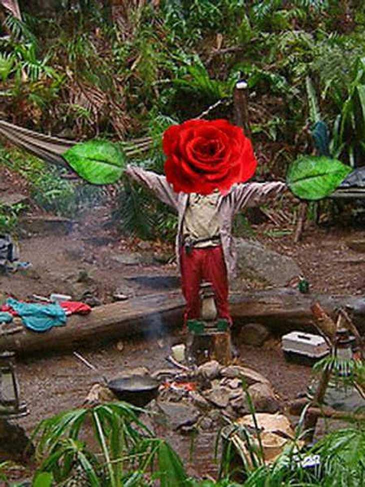 Warum nicht gleich ein Bachelor-Dschungelcamp?