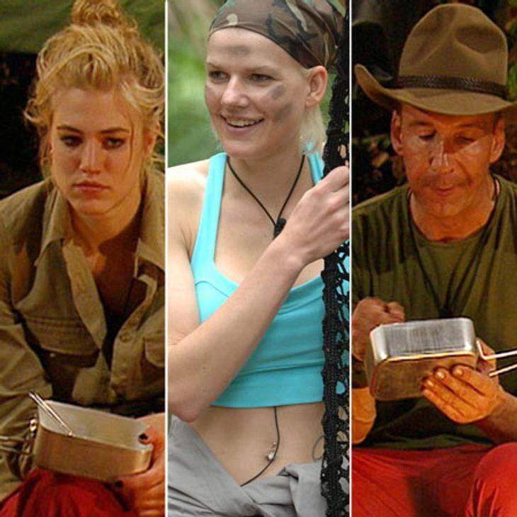 Wer wird Dschungelkönig 2014?