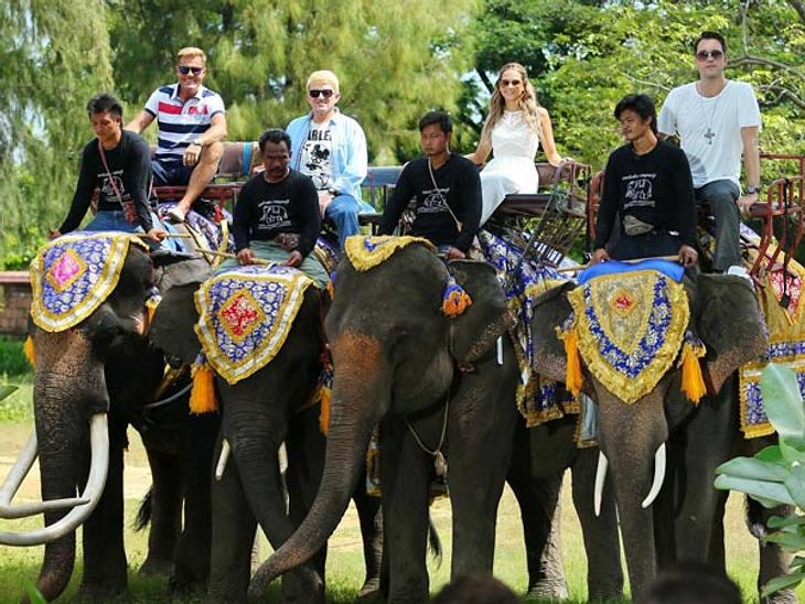 Dieter, Heino, Mandy und DJ Antoine wagen den Ritt auf dem Elefanten