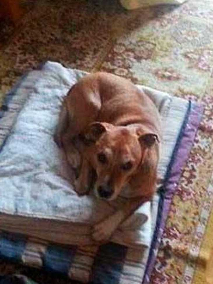 Kann Twitter den Ebola-Hund retten?