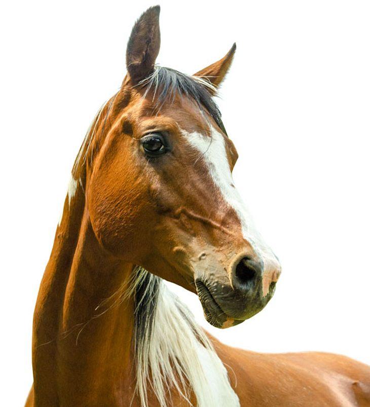 Ehepaar überrascht Mann Beim Sex Mit Pferd Intouch