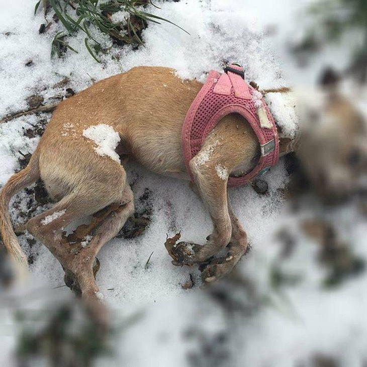 Hund wurde stranguliert - danach ist er erfroren!
