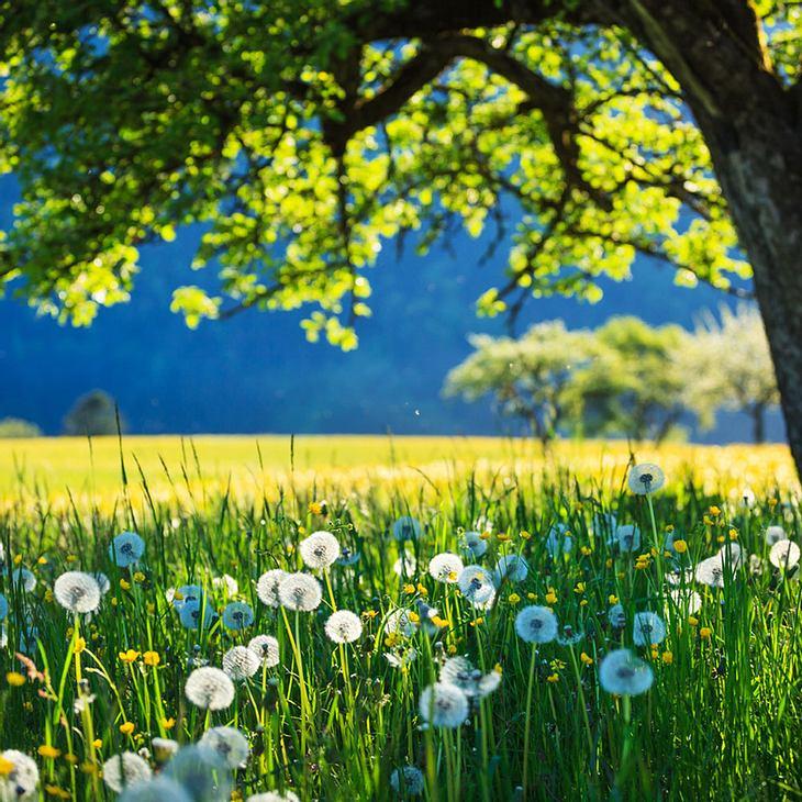 Der Frühling kommt: 30 Grad wärmer als noch vor wenigen Tagen