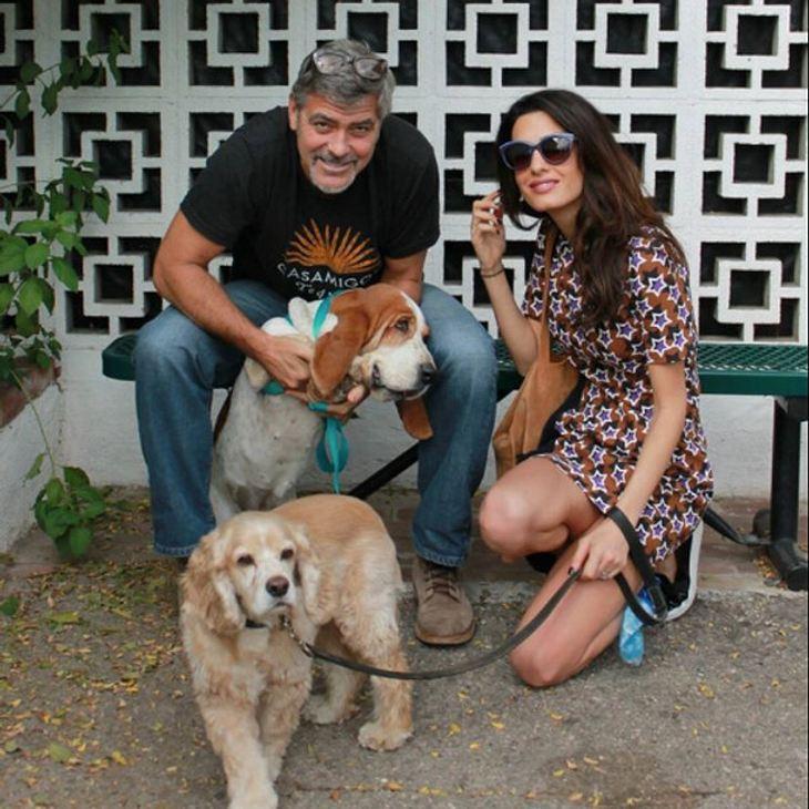 George Clooney und seine Amal haben jetzt noch eine Hündin