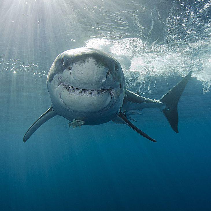Mann wehrt Hai mit Fausthieb ab