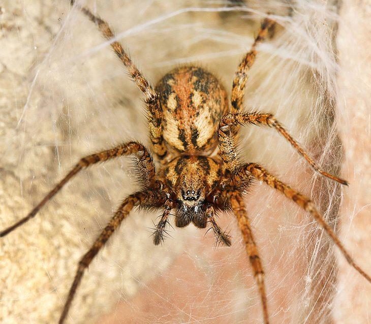 Giftspinnen Deutschland