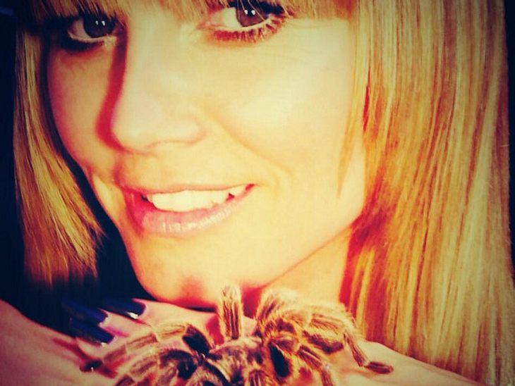 Die Spinnt doch, die Heidi! Bei Twitter postete die Model-Mama nun ein Foto mit einer Vogelspinne, die sie seelenruhig auf ihrer Hand hält. RESPEKT!