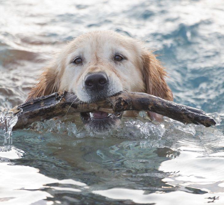 Hund stirbt nach Bad im See (Symbolbild)