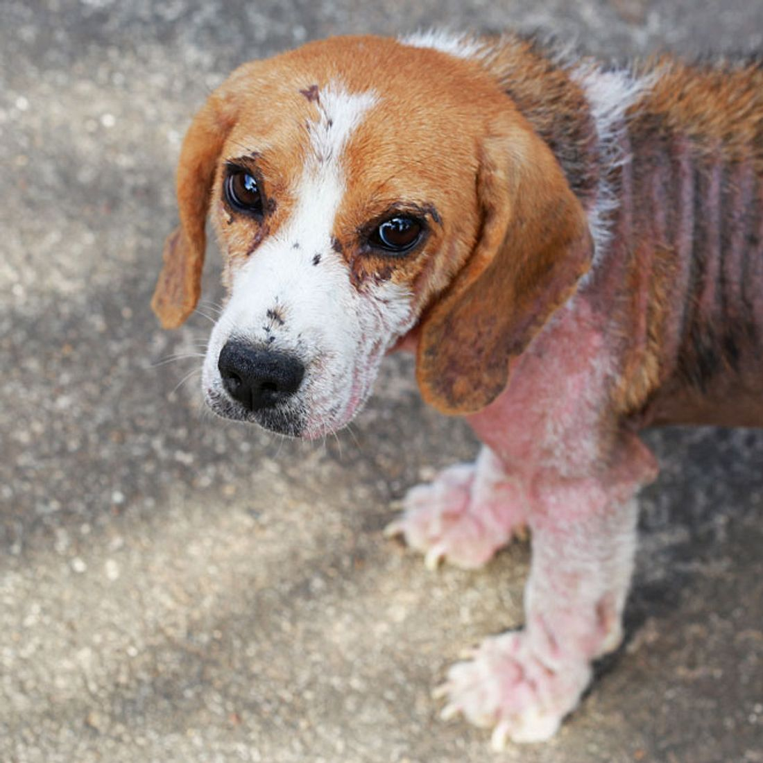 Einschläfern zu teuer: Frau lässt ihren Hund einfach verhungern!