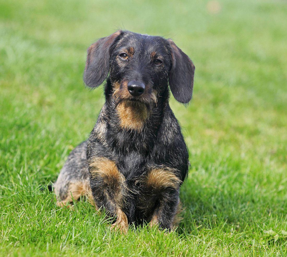 Beim Gassi gehen: 33-Jähriger tritt Hund tot (Symbolbild)