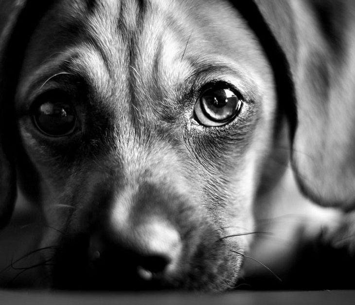 Mann schneidet Hunden Stimmbänder durch (Symbolbild)