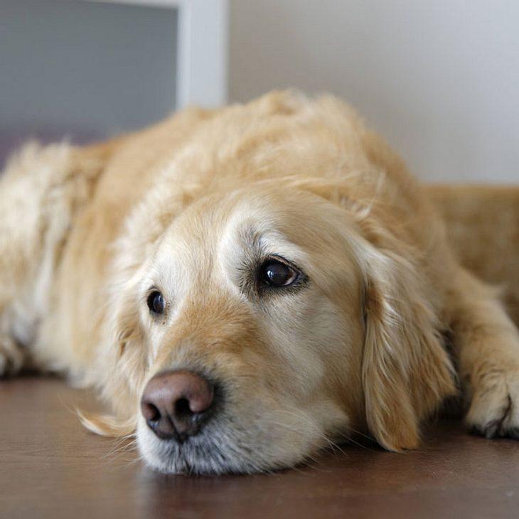 Fragwürdiger Trend: Künstliche Nägel für Hunde!