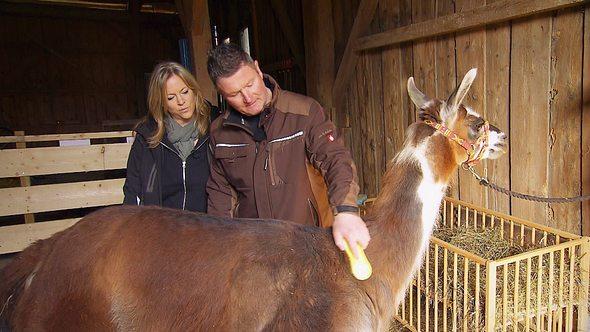 Liebes-Aus bei Alpakazüchter Henry und Sabine!