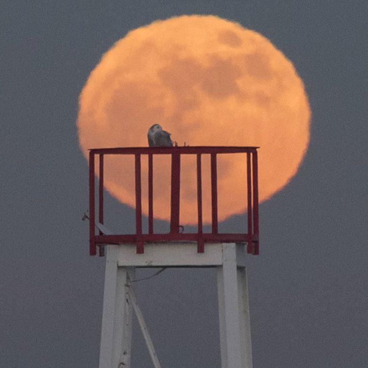 """Spektakel am Himmel: Nach 150 Jahren gibt es eine """"Super Blue Blood Moon Eclipse""""!"""