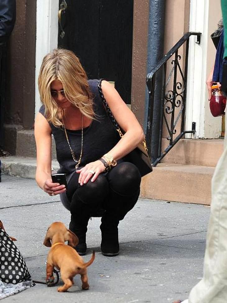 Jennifer Aniston: Das beste Jahr ihres LebensIhr erstes Baby haben Jennifer und Justin bereits adoptiert: Im Februar zog Welpe Sophie bei dem Paar ein. Jennifers vorheriger Hund Norman war im Jahr zuvor verstorben. Jen scherzte, Sophie sei