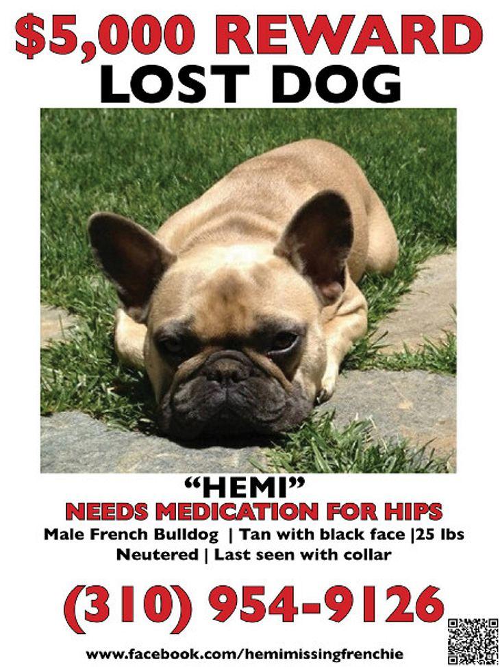Der Hund von Jeremy Renner ist weg