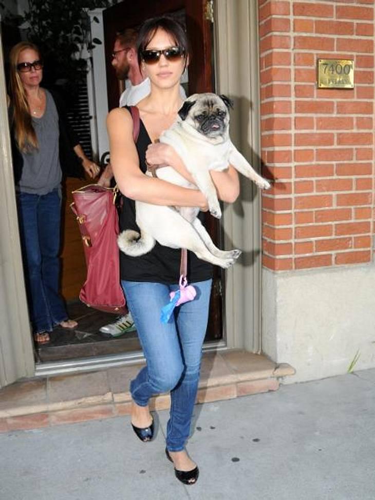 """V.I.Pets: Stars lieben ihre HundeJessica Alba (31) hat ein Herz für Hunde - aber wenn die Schauspielerin gestresst ist, braucht ihr Mops im wahrsten Sinne des Wortes ein dickes Fell. """"Ich schreie oder gehe ins Fitnessstudio oder mit de"""