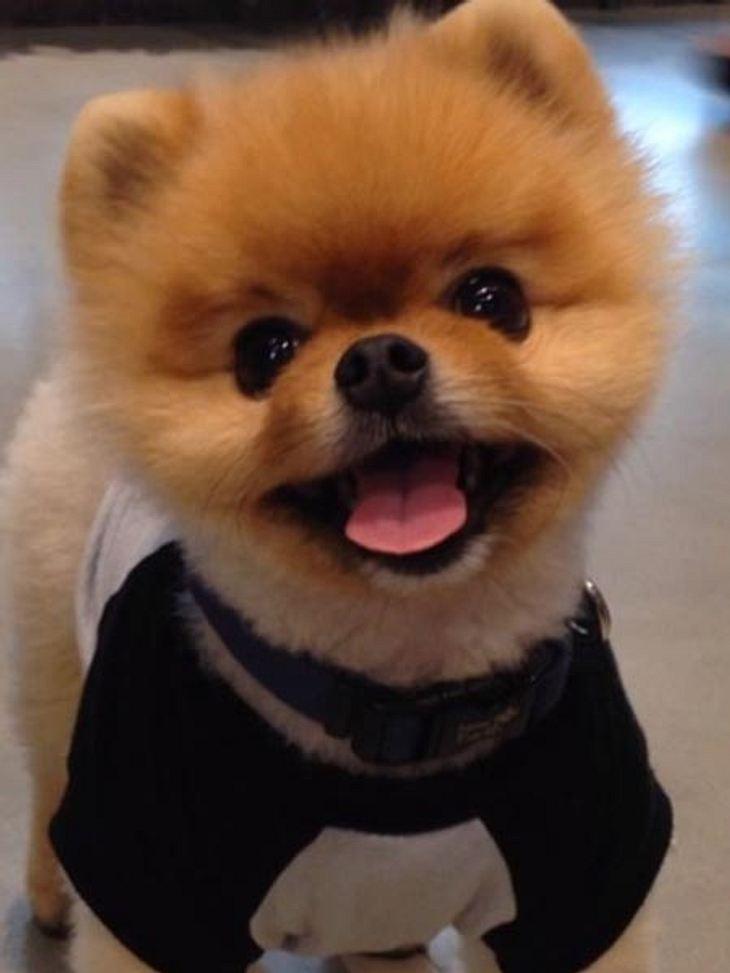 Die lustigsten Hunde-Videos aus dem Web