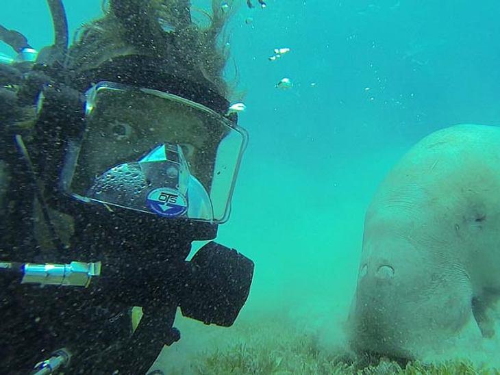 Ist das schon das gefährlichste Tier im Roten Meer? Jokos Blick nach zu urteilen muss es das sein