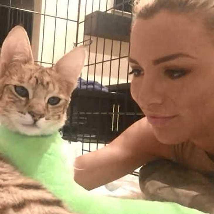 Jordan Carver: Große Sorge um ihre Muschi-Katze!