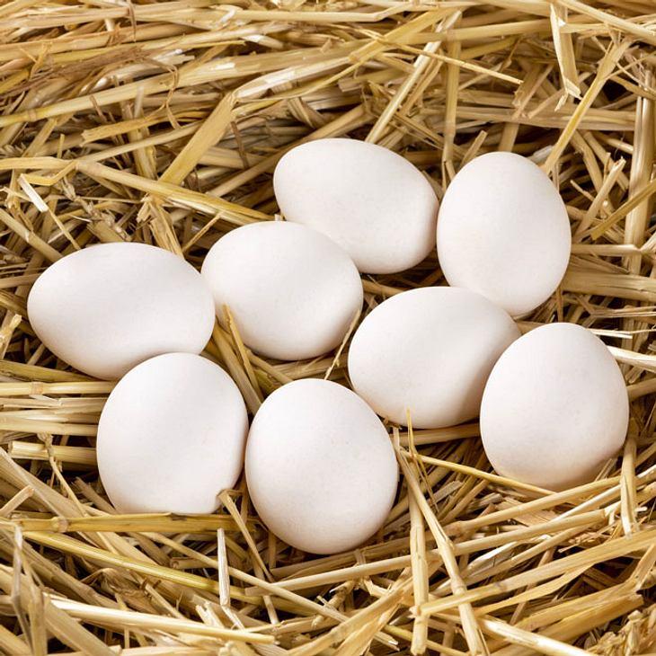Wie ein Huhn: 14-Jähriger legt Eier!
