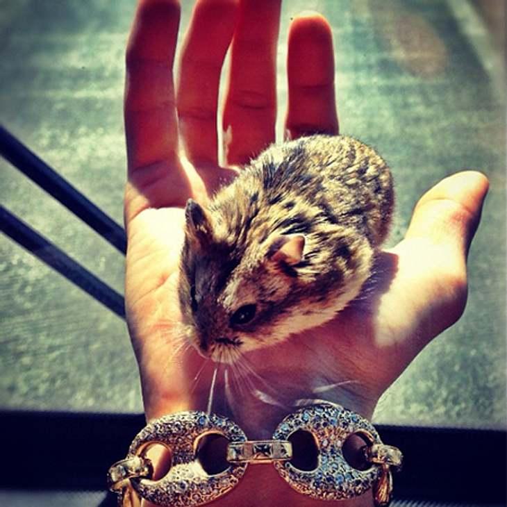 Tadaaaa... gestatten, das ist Pac, der Hamster von Jusitn Bieber.