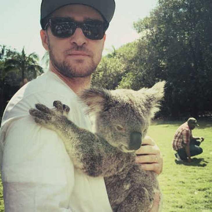 Justin Timberlake mit Koala-Kuschel-Kumpel