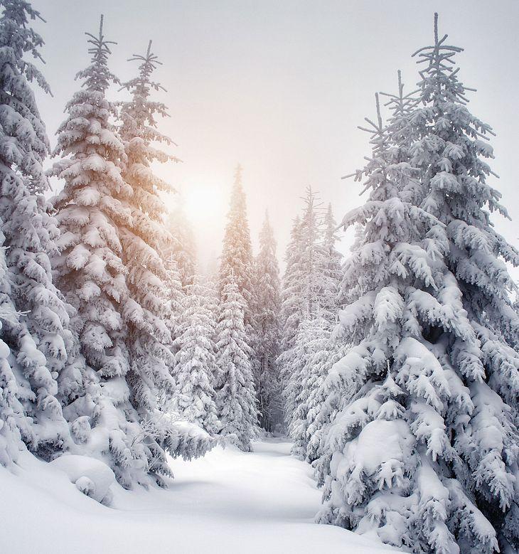 kältester Februar seit Jahren