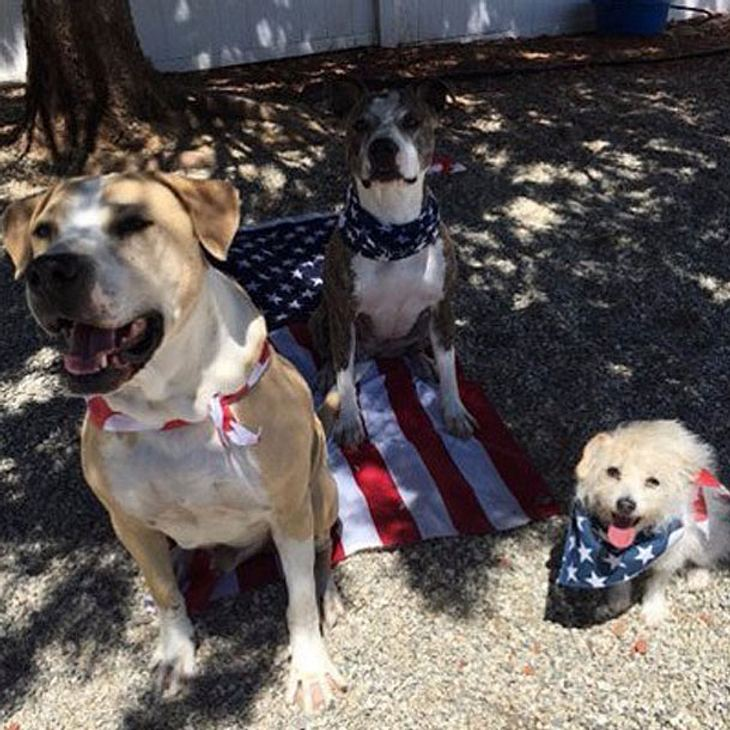Kaley Cuoco lässt ihre Hunde auf der Flagge sitzen
