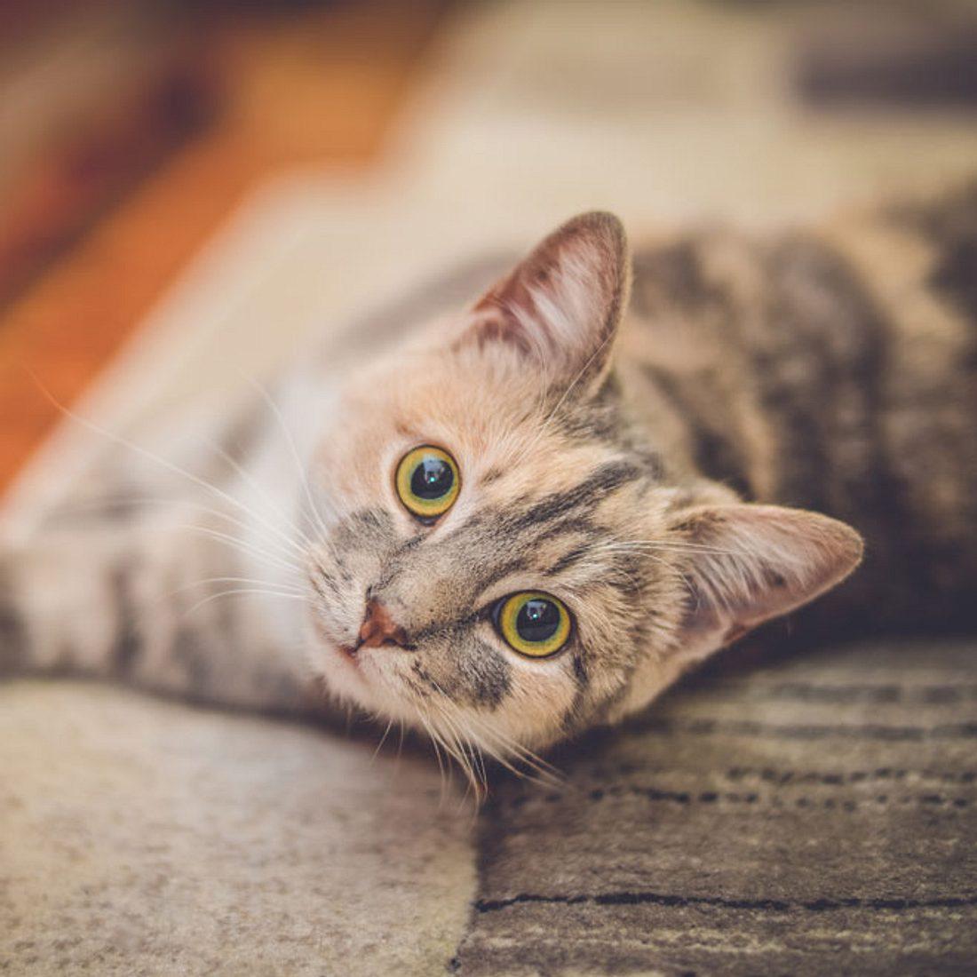 Mehr als 200 Tiere vergiftet: Brutaler Katzenkiller treibt sein Unwesen