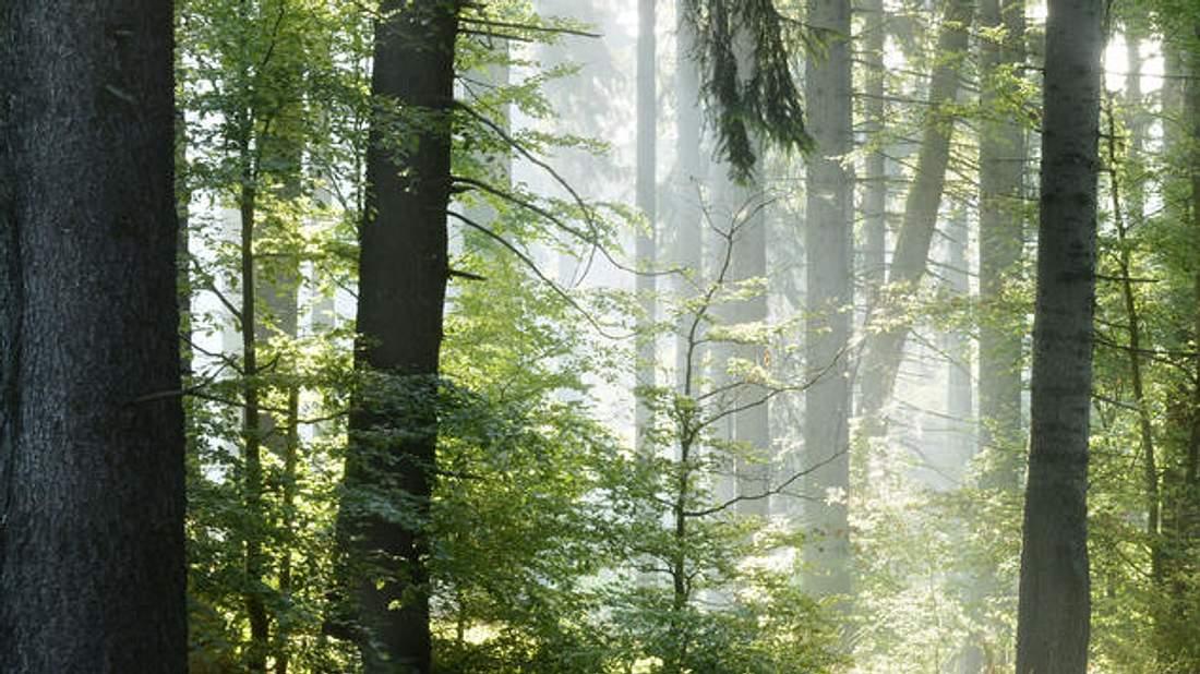 Kind Im Wald Ausgesetzt