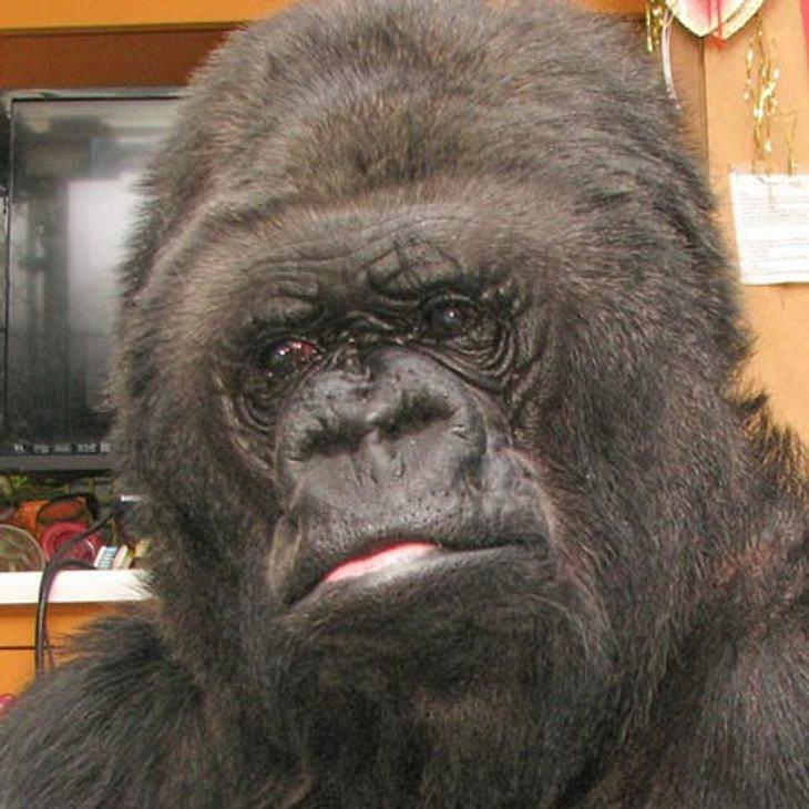 Glasige Augen - Koko ist traurig