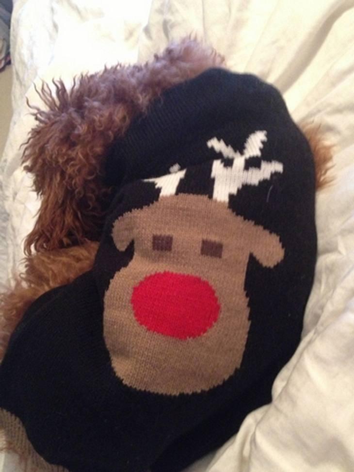 Ho Ho Ho - Stars im WeihnachtsfieberKristin Cavallari  (25) macht mit der Weihnachtsdeko auch vor ihrem Hund nicht Halt. Mit einem Hunde-Pullover wird er zu Rudolph, dem rotnasigen Rentier. Süß.