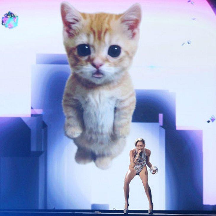 Miley Cyrus brachte zu den AMAs ihre Katze mit.