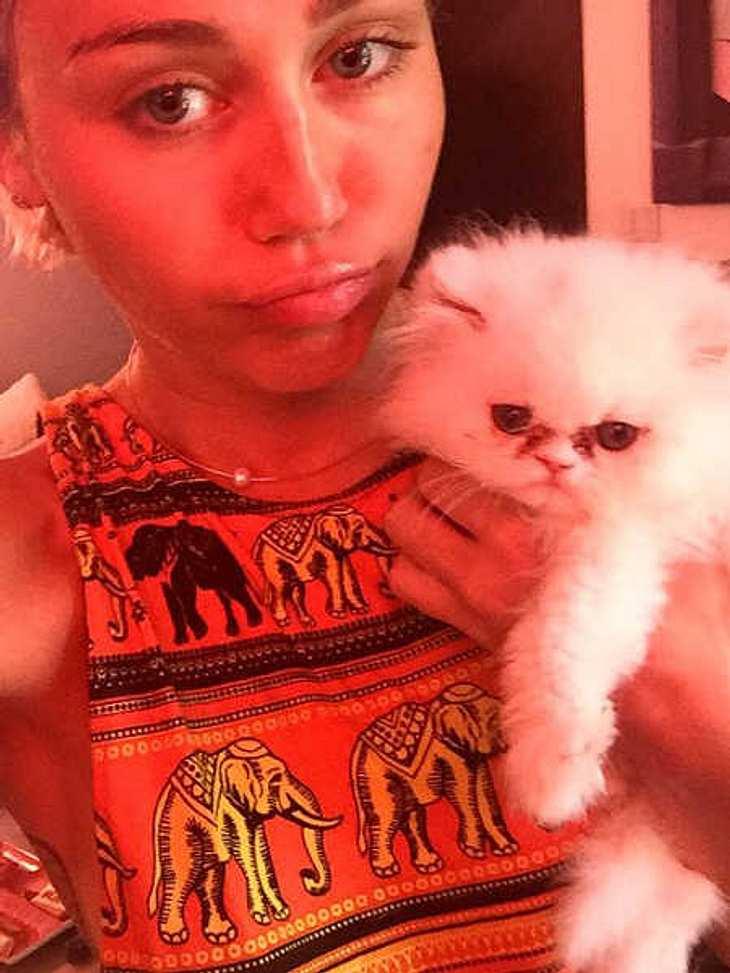 Miley Cyrus: Lässt sie ihre Baby-Katze verwahrlosen?